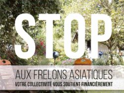 Stop frelons asiatiques
